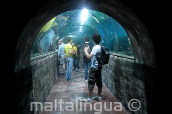 Tanulók az Aquarium alagútjában